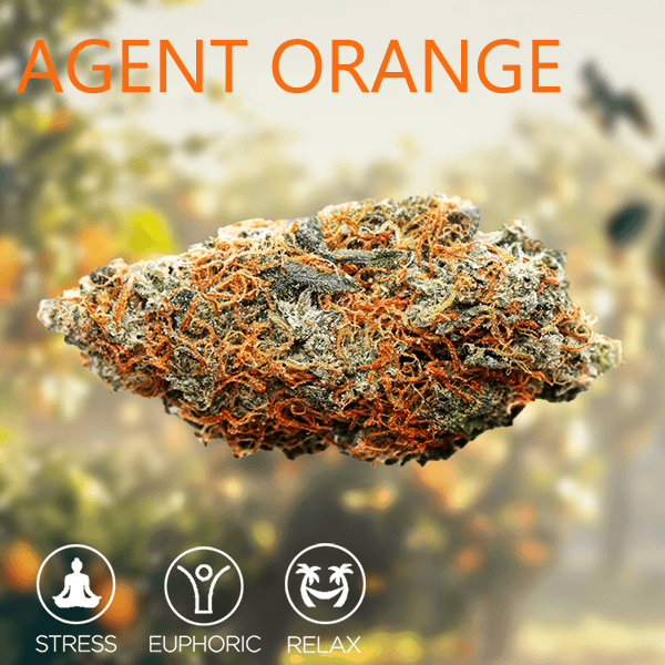 Tropizen's Agent Orange Cannabis Bud