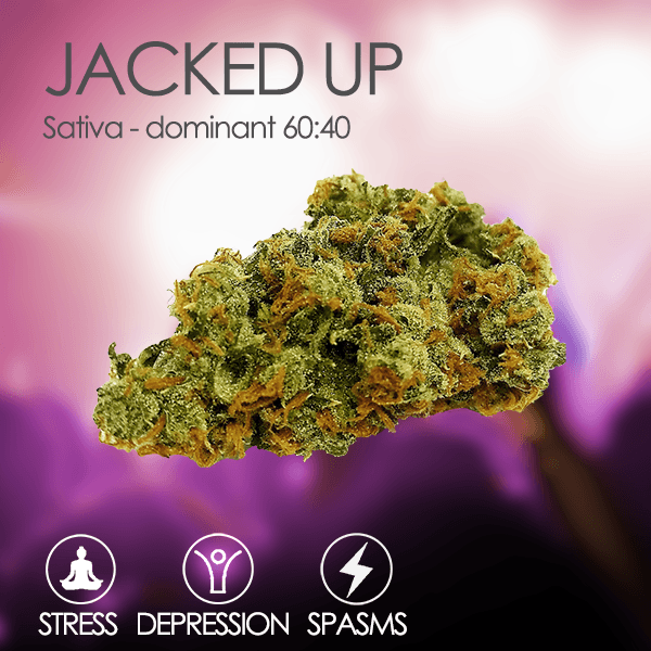 Tropizen's Jacked Up Sativa Cannabis Bud