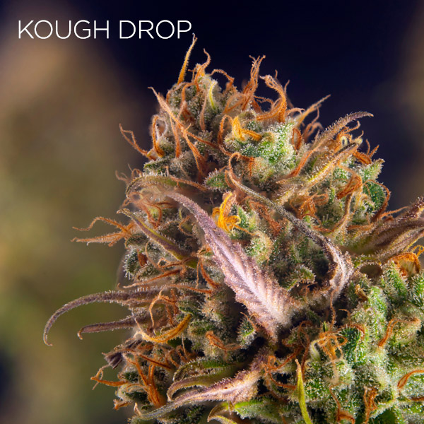 Kough Drop strain